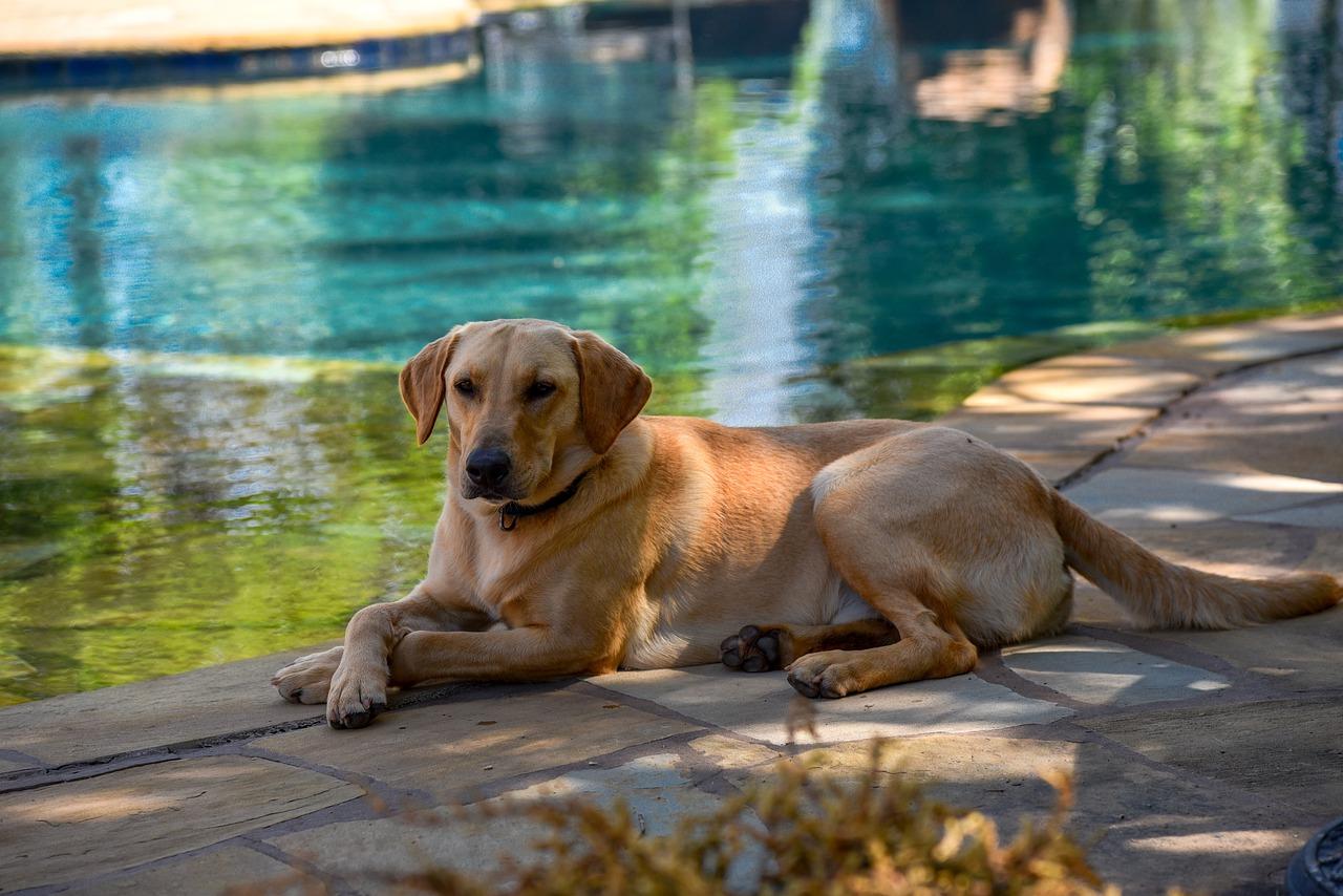 dog, pool, water